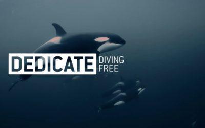 Diving Free